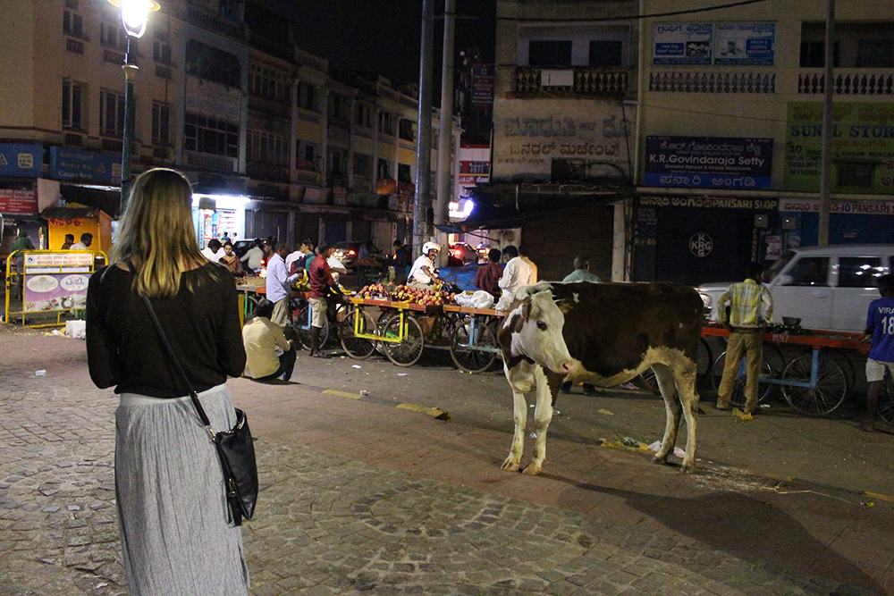 A Leadership Network member meeting a cow on a street at night