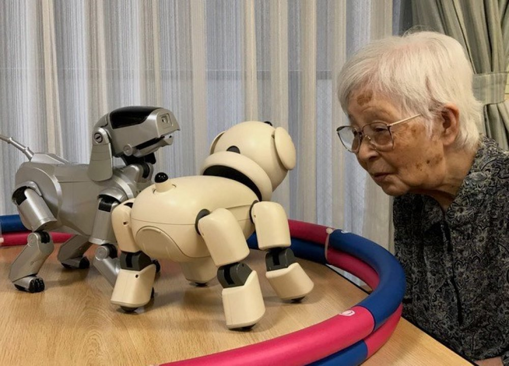 An elderly woman stares at two robot dogs