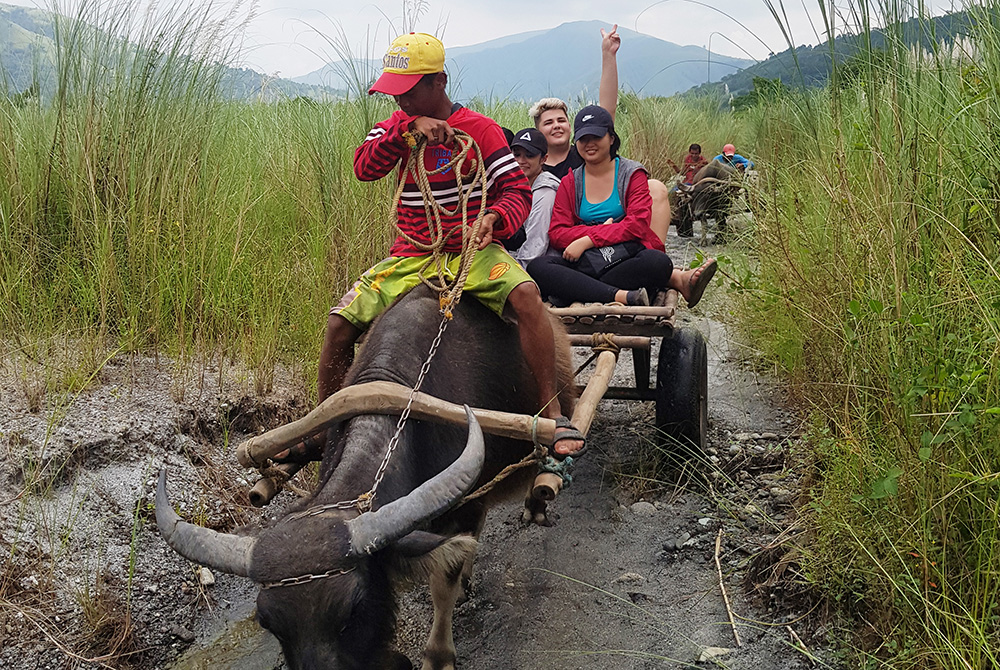 Tim and colleagues on a cart being pulled by a water buffalo